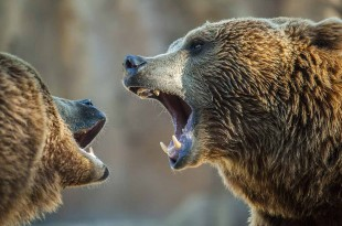 The 12 best ETFs to battle a bear market